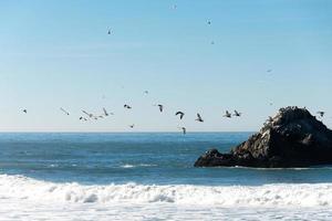 Birds flying above the ocean