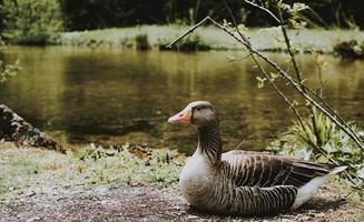 Duck near body of water