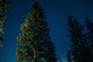 Illuminated pine tree at night