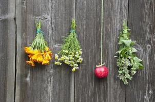 hierbas medicinales flores y manzana roja en la pared