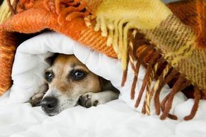 Cozy home relaxing pet
