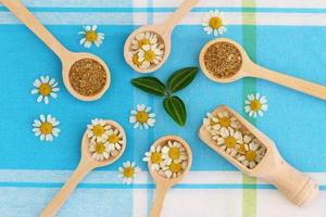 Fresh and dried chamomile flowers on spoons on blue cloth