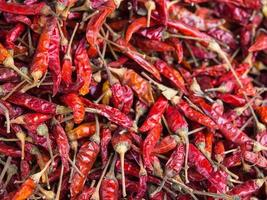 red dried chilli photo