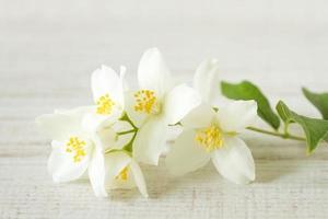 flores de jasmim, foco seletivo