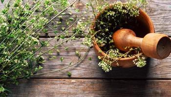 Capsella plant
