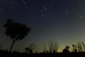 Silhouettes of plants and star trails