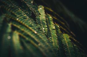 Green fern after rain