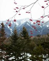 Red leaves in front of mountains and trees