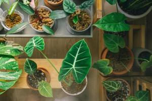 Top view of house plants