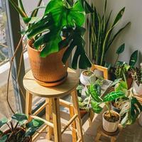 plantas de interior cerca de una ventana.