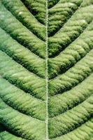 Patterns of a big plant