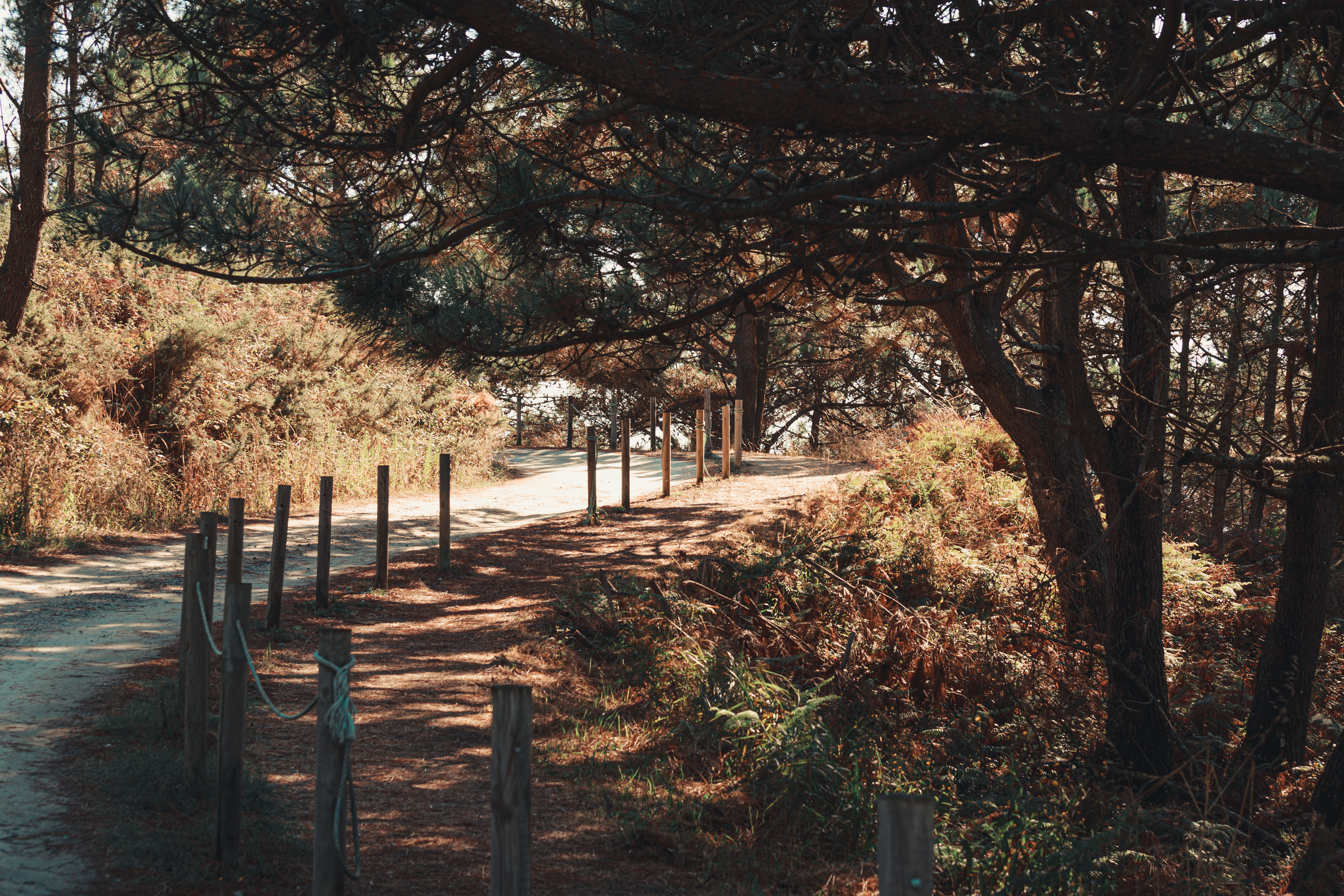 tiro horizontal del camino de la naturaleza
