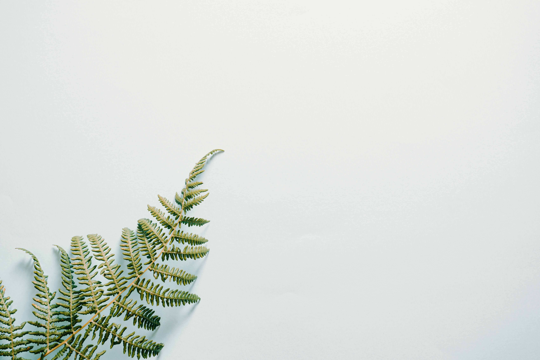 Fern leaf on white