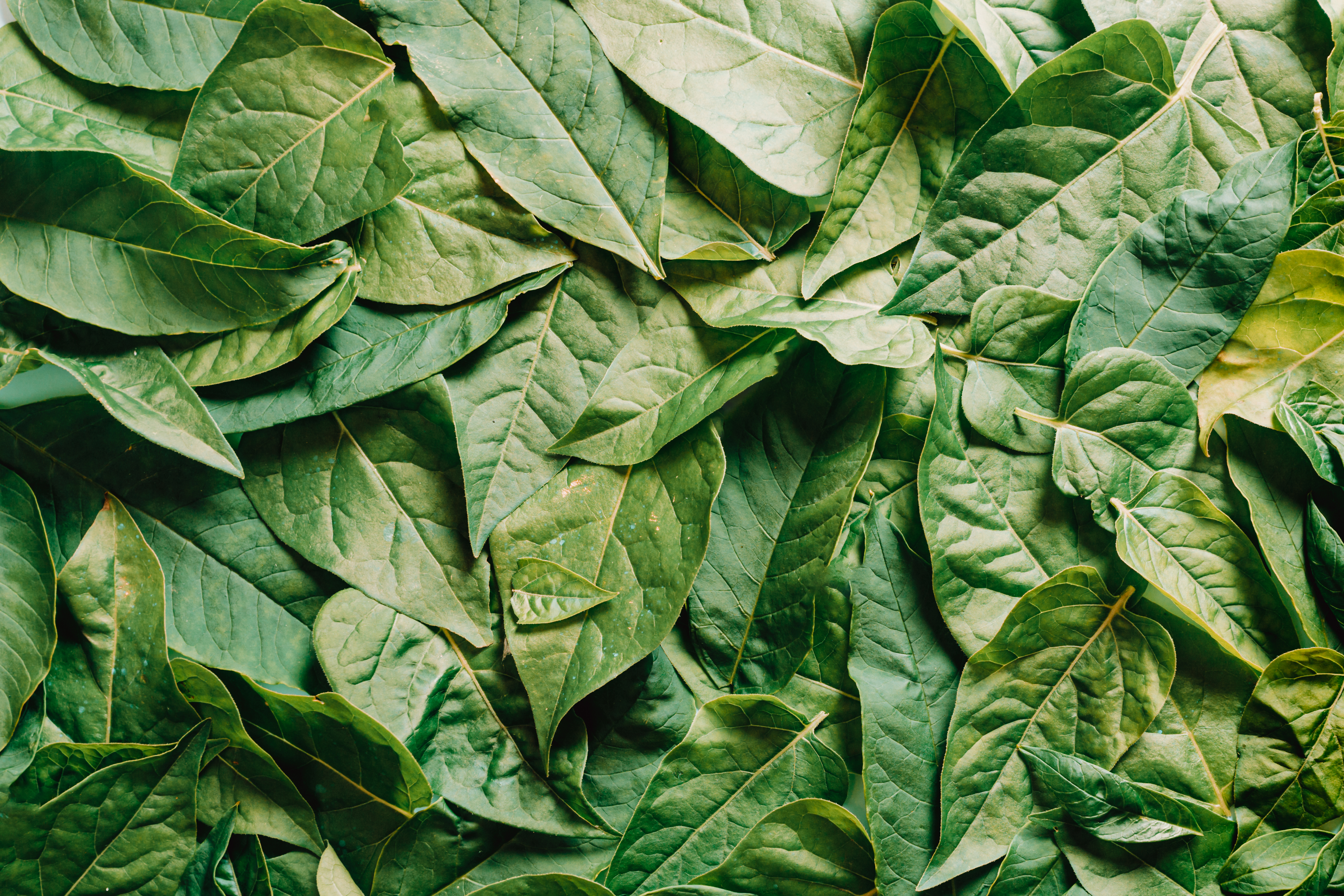 un montón de hojas verdes foto