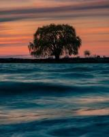 Silhouette of a tree on the shore