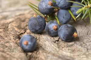 Juniper berries isolated on a wooden background