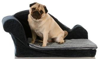 spoiled dog photo