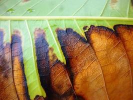 Beautiful rough  leaf