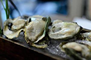 Fresh Oysters photo