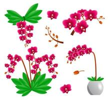 Set of orchid flowers vector