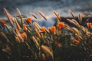 Fotografía de enfoque selectivo de flores de naranja foto