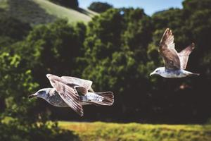 Selective focus photography of two white birds  photo