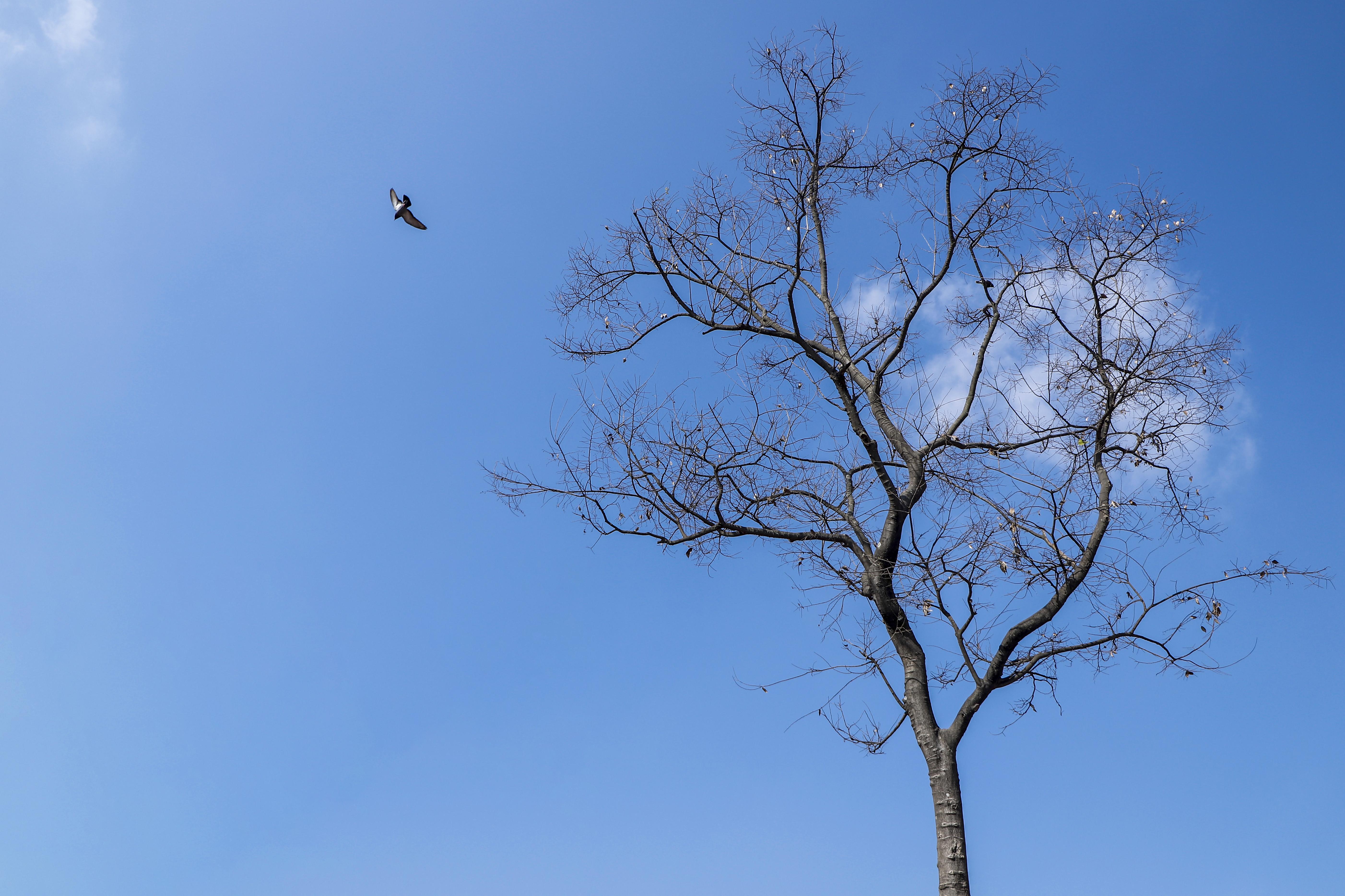 Bare tree and bird