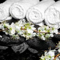 Ramita floreciente de ciruela, toallas blancas sobre piedras zen