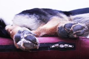 patas de perro foto