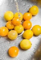 Washing yellow tomatoes and lemons