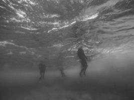 Grayscale photo taken underwater