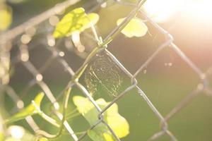 ragnatela in una recinzione a catena