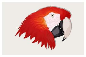 Realistic red parrots macaw