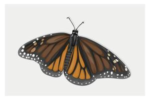 dibujo a mano de mariposa alada marrón vector