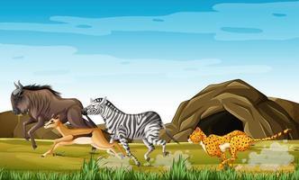 animales de caza leopardo vector