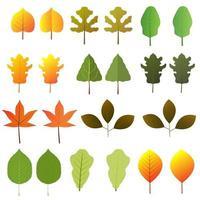 diferentes tipos de folhas