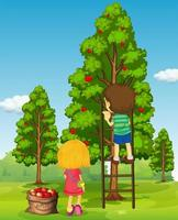 Boy and girl picking apples  vector