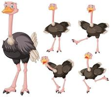 conjunto de lindo personaje de dibujos animados de avestruz
