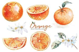 Set of oranges painted with watercolors