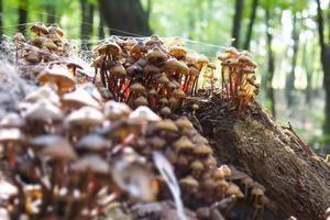 champignons dans la forêt photo