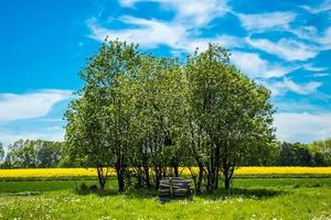 árvores em um campo verde