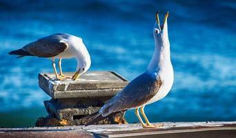 Seagulls at the sea photo