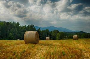 Field after harvest
