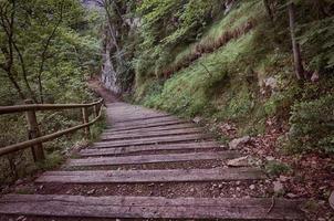 escada de madeira na floresta