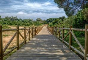 houten pad in de zomer