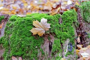 Fallen leaves on an old tree
