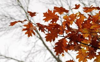 Rustic leaves of a tree branch