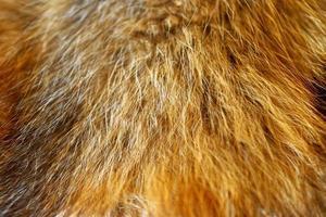 piel de zorro de cerca