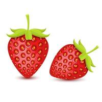 Fresh strawberries isolated  vector