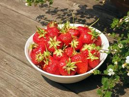 tazón de fresas
